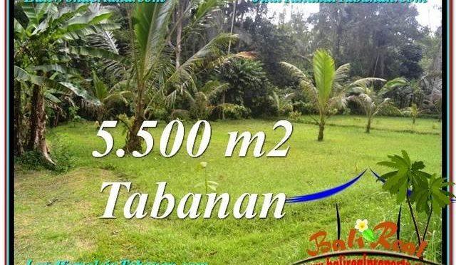 DIJUAL TANAH di TABANAN BALI Untuk INVESTASI TJTB295